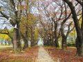 남한강 힐링 정원, 봄파머스가든